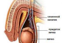 علل و درمان درد در بیضه ها
