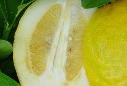 خواص و فواید میوه بالنگ