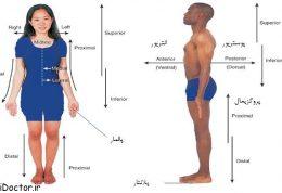 اصطلاح شناسی جهت یابی بدن و آناتومیک