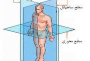 سطوح و صفحات فرضی بدن انسان
