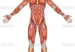 کاربرد های آناتومی انسان