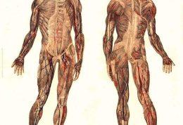 تاریخچه ای از آناتومی انسان | Human Anatomy