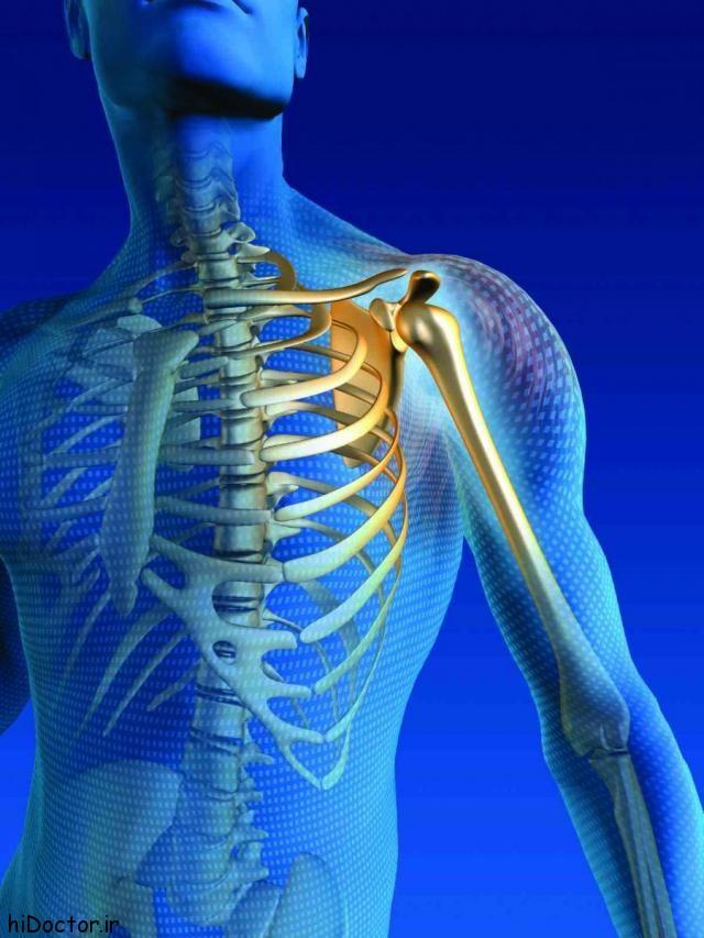 ترکیبات اصلی استخوان ها