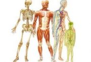 آناتومی انسان - مجله پزشکی دکتر سلام