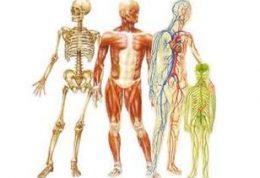 آناتومی انسان – مجله پزشکی دکتر سلام