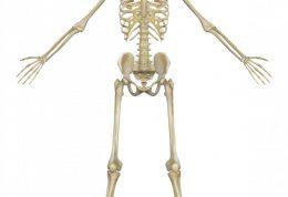 وظایف استخوان ها