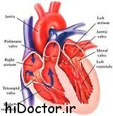 مراقب بیماری های قلبی باشید