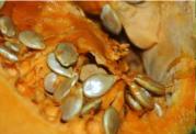 معرفی غذاهایی که از بروز جوش در صورت جلوگیری میکند