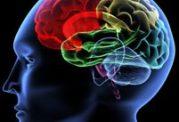 كدام يك از غذاها برای سلول هاي خاكستري مغز مفيدند؟