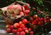 میوه ای که خطرناكترین سلولهای سرطانی را ازبین می برد