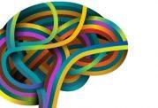 چگونه مغز افراد تحريك مي شود