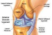 هرآنچه باید درباره مفصل زانو بدانیم