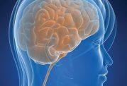 مغز خانمها چه توانایی هایی دارد؟