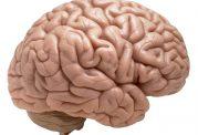 با چه مواد غذایی از مغز مراقبت کنیم