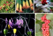 از کجا گیاهان سمی را تشخیص بدهیم