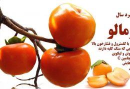 خواص میوه سرد سال خرمالو
