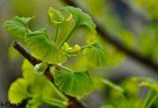 چگونه با گیاهان طبیعی حافظه خود را تقویت کنیم