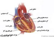 سیستم گردش خون | آناتومی و فیزیولوژی