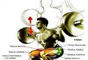 چگونه با وزنه عضله سازی کنیم