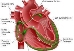 علل و علائم و نشانه های ایست قلبی را باهم مرور میکنیم