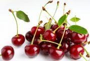 میوه ی آلبالو و خواص آن