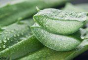 گیاهانی که دیابت نوع دو را کنترل می کنند
