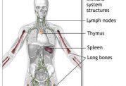 تغییرات پیری و اثرات آنها بر سیستم ایمنی بدن