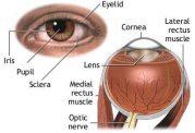 چرا معاینه کامل چشم در دیابتی ها ضروری است؟