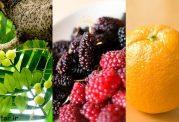 مکمل های غذایی چه تاثیری در سلامتی بدن دارند؟