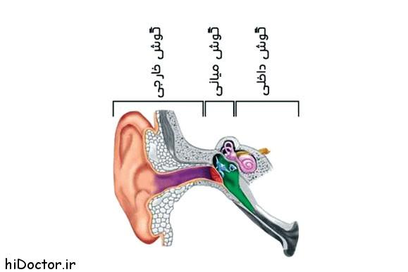 با نقش گوش داخلی آشنا شوید