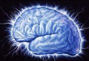 چه میوه هایی برای تقویت حافظه مفیدند