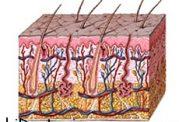 بیماری پمفیگوس بیشتر در چه کسانی دیده میشود