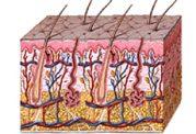 اگزما و پوست شما