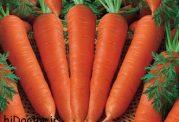 هویج ، میوه ای با خاصیت های بی شمار