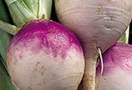 شلغم گیاهی که خوردن همه روزه آن مفید است