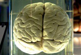 در مغز یک مولکول غمگین ابداع شد