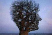 سلامت روانی از دیدگاه روانشناسان