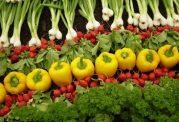 اگر می خواهید رژیم غذایی گیاه خواری داشته باشید بخوانید