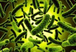 هرآنچه درمورد پروبیوتیک ها باید بدانید