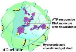 از بین بردن  سلول های سرطانی از داخل به واسطه ذرات نانو
