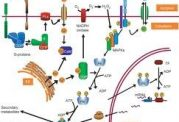 در درک بیماری, متابولیت ها چه نقشی دارند