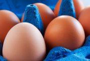 رژیم های پروتئینی تا چه حد مفیدند؟