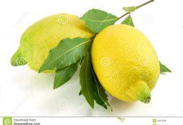 برگهای  به لیمو چه خاصیتی دارد