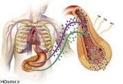 غلظت یک آنزیم کبدی با ریسک ابتلا به دیابت حاملگی چه ارتباطی دارد