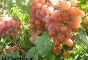 ارمغان سلامت قلب و عروق با این میوه