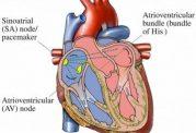 ساخت ضربانسازهای قلب از گذشته تا به امروز