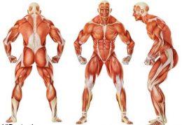 راحتی عضلانی (انبساط و شل بودن عضلانی)