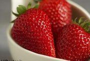 عکس های تماشایی از میوه ی خوشمزه توت فرنگی