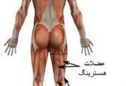 تعریف عضلات آنتاگونیست (مخالف) Antagonist
