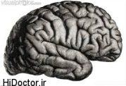 بر سلولهای مغزی کنترل کننده  اشتها  لپتین چه اثراتی دارد